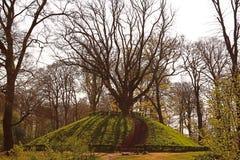 Trappa till ett moget träd i mitt av ett Forest Park  royaltyfri foto