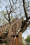 Trappa till höjdträdet Royaltyfri Bild