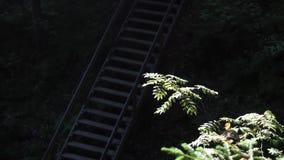 Trappa till skogen i nationalpark nära gröna träd i solljus footage Brant trappa i grön tät skog med arkivfilmer
