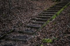 Trappa upp i skogen Arkivbild