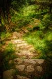 Trappaslinga i Muir av Dinnet den nationella naturreserven i Skottland Royaltyfri Fotografi