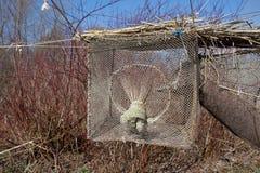 Trappe d'oiseau dans le cap de Vente Photographie stock