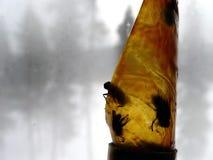 Trappe de mouche Photo libre de droits
