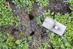 Trappe de souris sur la pelouse de jardin Photographie stock