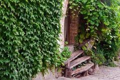 Trappe en bois avec les escaliers et le lierre images libres de droits