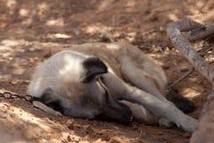 Trappe négligée dormant dans le sable Image libre de droits