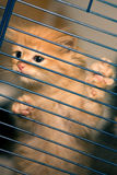Trapped. A little cat traped in a cage trying to get out Stock Photography