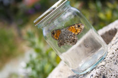 Trapped butterfly Royalty Free Stock Image