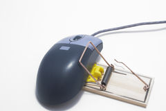 Trapped Computer Mouse Royalty Free Stock Images