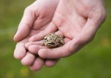 Trapped Frog Royalty Free Stock Images