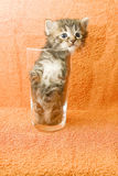 Trapped kitten Stock Photography