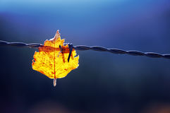 Trapped leaf Royalty Free Stock Photos