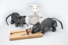 Trapped mouse Royalty Free Stock Photos