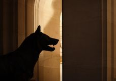 Trapped by a Wolf. Silhouette of a wolf in a historical building Stock Photography