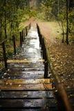 Trappen in de herfstpark Royalty-vrije Stock Fotografie