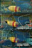 Trappes et bouées de langoustine Photo libre de droits
