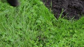 Trappola della talpa morta video d archivio immagine di for La talpa animale