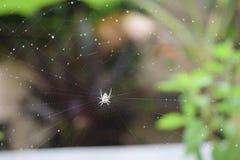 Trappola del ragno Immagini Stock Libere da Diritti