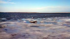 Trappola dell'aragosta e dei gabbiani nella baia congelata di Cape Cod Fotografia Stock Libera da Diritti