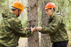 Trappola della macchina fotografica sull'albero Fotografia Stock