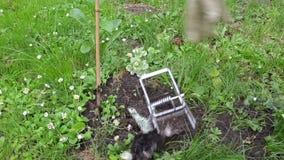 Trappola animale della talpa morta archivi video video for La talpa animale