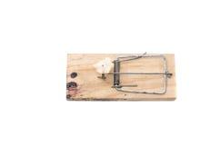 Trappola per topi con esca su un fondo bianco immagine stock