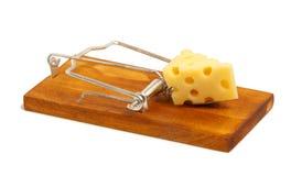Trappola per topi con formaggio Immagine Stock