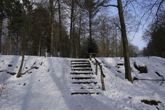 Trappuppgång i winterly skog royaltyfria bilder