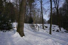 Trappuppgång i winterly skog fotografering för bildbyråer