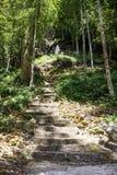 Trappuppgång till en helig whtestaty överst av en kulle i skog i fördämningen Bri, Vietnam royaltyfria bilder