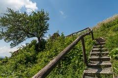 Trappuppgången upp till trädet och fördärvar av slotten Sebes arkivbilder