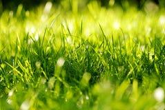 Trapuntare dell'erba verde Fotografie Stock