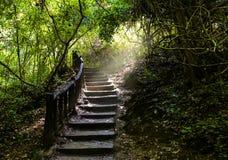 Trapweg die een lange weg tot vers groen dicht bos gaan stock foto's