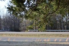 Trasa 360 Widzieć spod drzewa jak fotografia stock