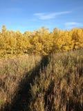 Trascini attraverso erba e legno alti in autunno Fotografia Stock Libera da Diritti