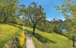 Trascini attraverso un frutteto nelle montagne delle alpi Fotografia Stock Libera da Diritti
