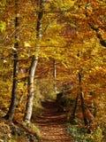 Trascini in foresta dai colori vibranti nella caduta Immagine Stock Libera da Diritti