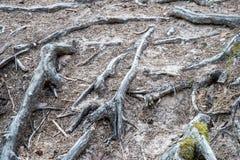 Trascini nel legno vicino al mare nelle dune Fotografie Stock