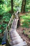 Trascini nella foresta - Victoria Island - BC - il Canada fotografia stock libera da diritti