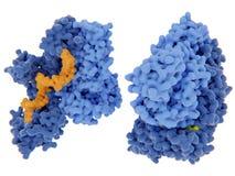 Trascrittasi inversa di HIV-1 royalty illustrazione gratis