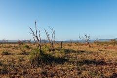 Trascuratezza del Bush africano di estate fotografia stock