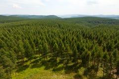 Trascuratezza della foresta e delle colline con gli alberi verdi Immagini Stock