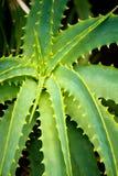 Trasferimento del polaroid del cactus Immagini Stock