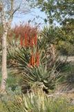 Trasferimento del polaroid del cactus Fotografie Stock Libere da Diritti