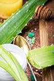 Trasferimento del polaroid del cactus Fotografia Stock