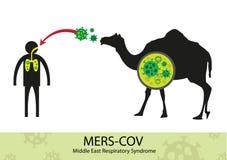 Trasferimento di Mers Corona Virus dal cammello nell'essere umano Fotografia Stock Libera da Diritti