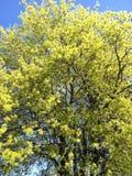 Trasformazione della primavera Fotografia Stock