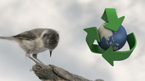 Trash containers for recycling. Trash container and bird with recycled logo stock video