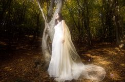 Trash the dress in autumn forest royalty free stock image