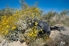 Trash garbage bag abandoned in the desert, next to beautiful yellow wildflowers. Taken in the Salton Sea area of California. Concept for littering stock photo